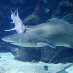 Aquarium Finisterrae, La Casa de los Peces, A Coruña