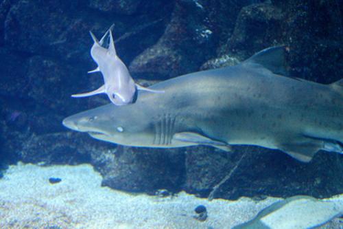 Aquarium finisterrae la casa de los peces a coru a for Cria de peces en casa