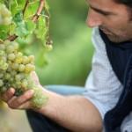 Feira do Viño do Rosal reunirá a doce bodegas del 13 al 15 de julio